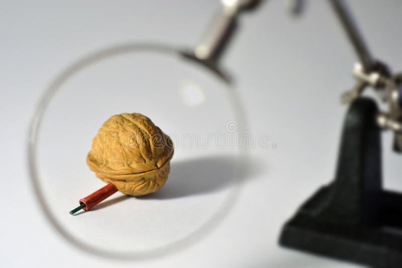 The Nutcracker stock photos