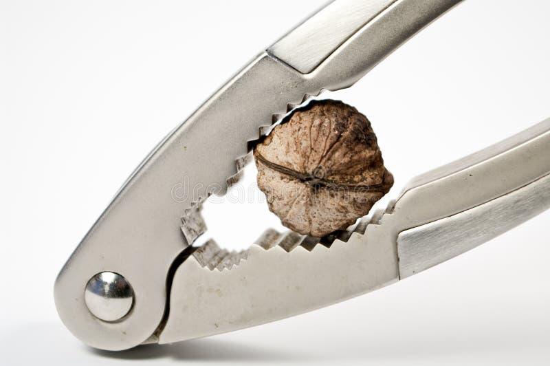 Nutcracker and walnut stock photography