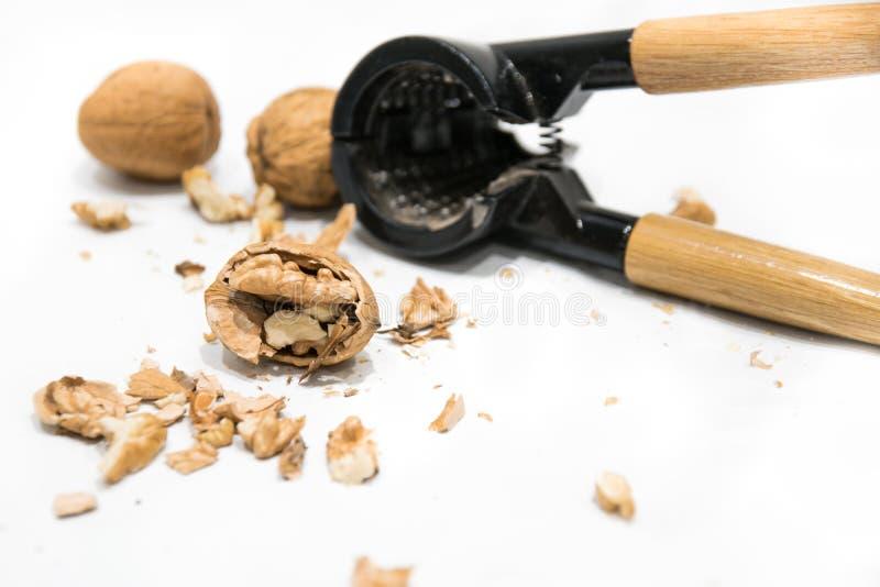 Nutcracker, walnut kernel peeled and whole nutshells, on a white background stock images