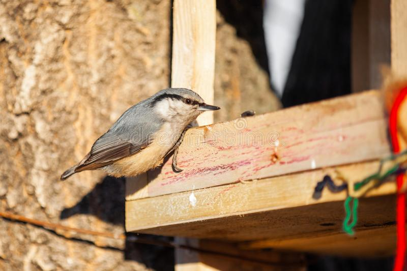 Nuthatch at wooden bird feeder. In winter royalty free stock photography