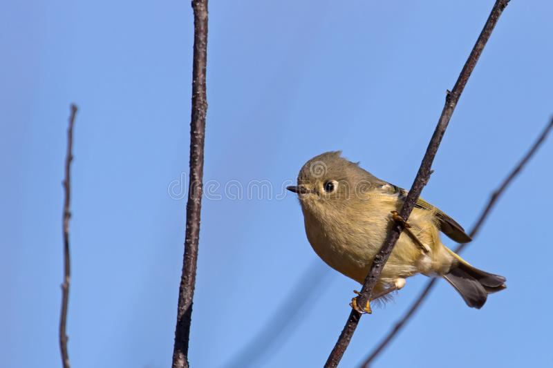 Cute little bird on a clear minnesota day royalty free stock photography