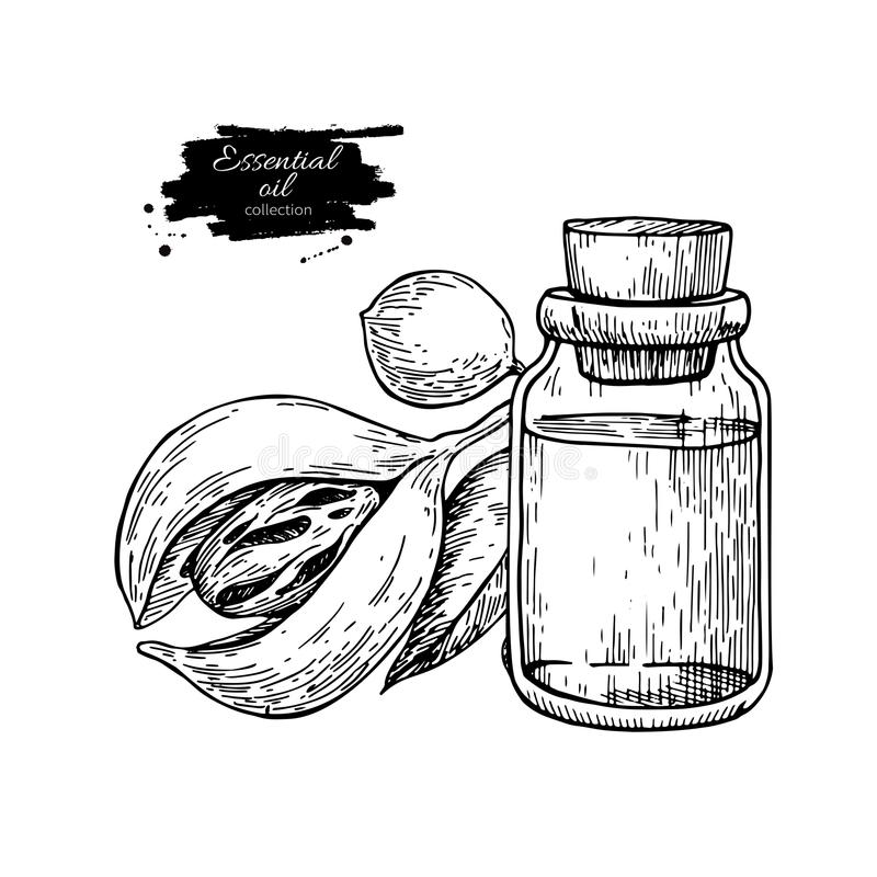 Nutmag essential oil bottle and mace fruit. Hand drawn vector illustration. Isolated drawing royalty free illustration