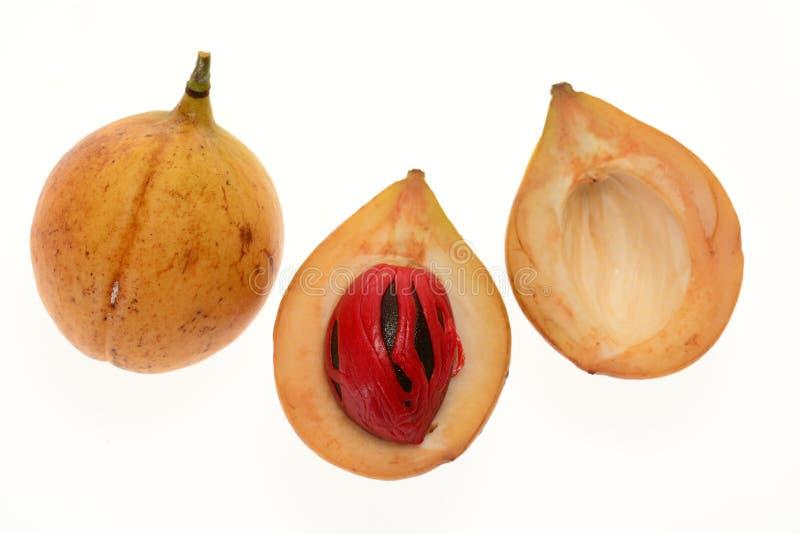 Nutmeg obraz royalty free
