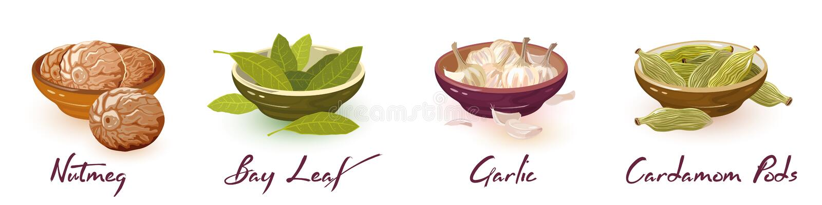 Nutmeg, bay leaves, garlic, cardamom pods. Vector spices assortment set with icons and lettering. Natural products, design elements for packing, recipes royalty free illustration
