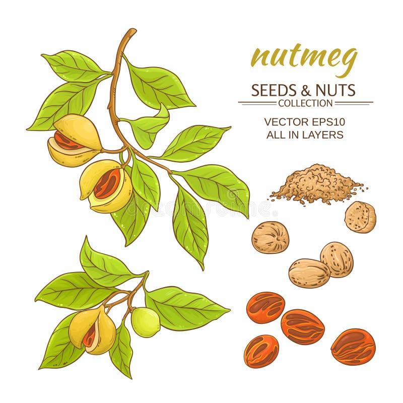 Nutmeg vector set. Nutmeg branches vector set on white background vector illustration