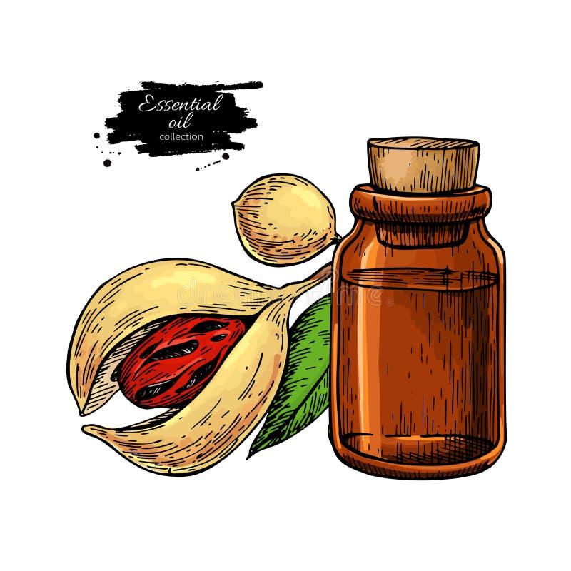 Nutmeg essential oil bottle and mace fruit. Hand drawn vector illustration. vector illustration