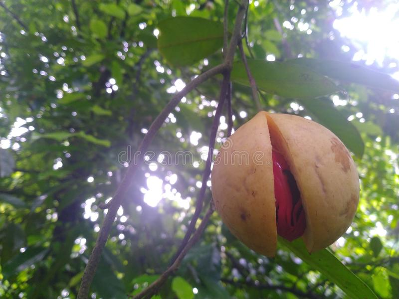 Fruits Kerala India Stock Images - Download 243 Royalty Free