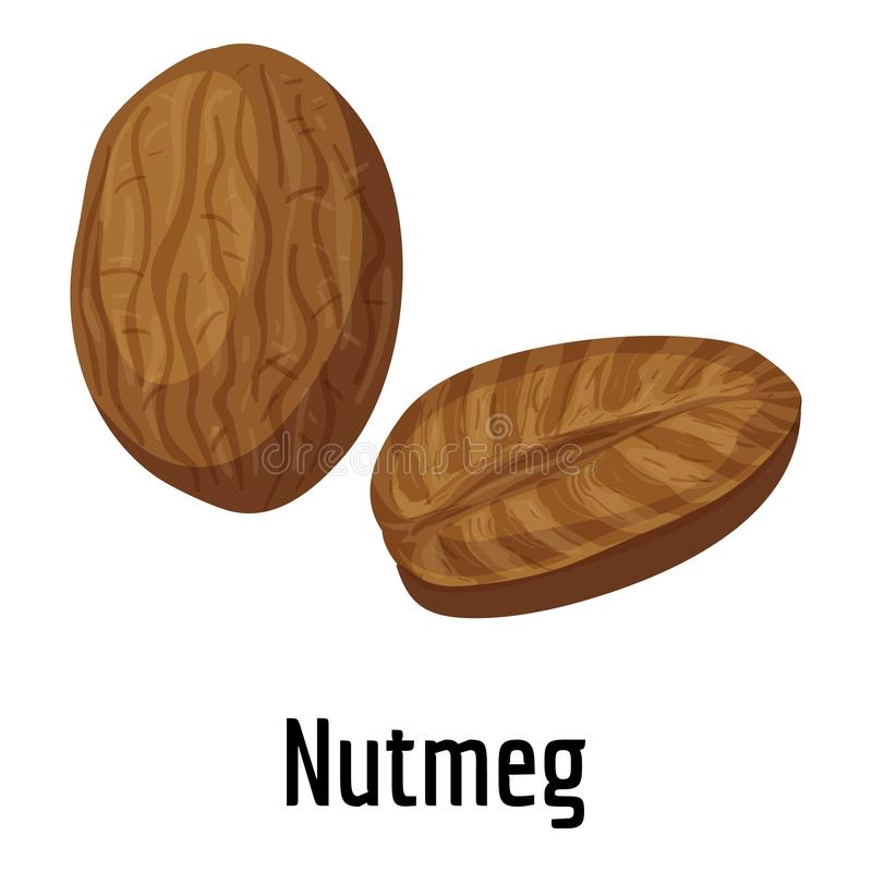 Nutmeg icon, cartoon style. Nutmeg icon. Cartoon of nutmeg vector icon for web design isolated on white background vector illustration