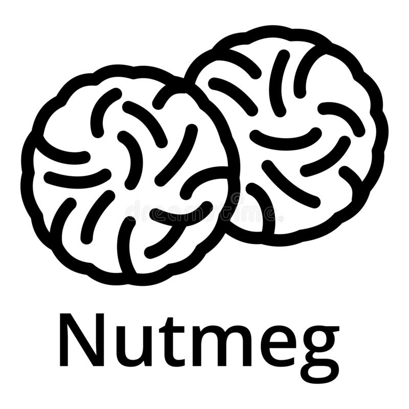 Nutmeg icon, outline style. Nutmeg icon. Outline nutmeg vector icon for web design isolated on white background vector illustration