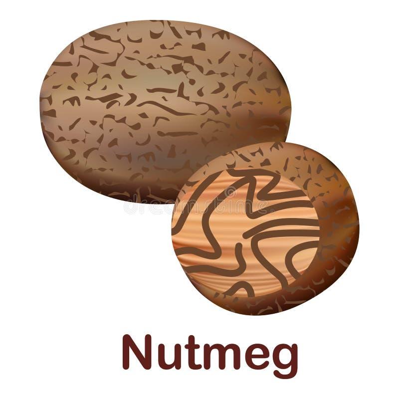 Nutmeg icon, realistic style vector illustration