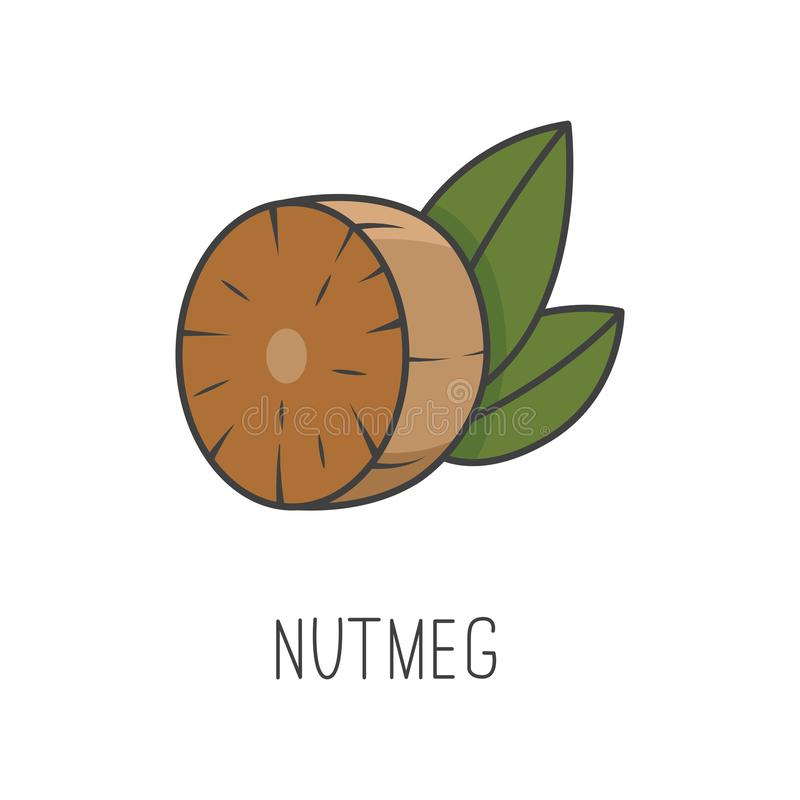 Nutmeg line vector illustration, cooking isolated icon. stock illustration