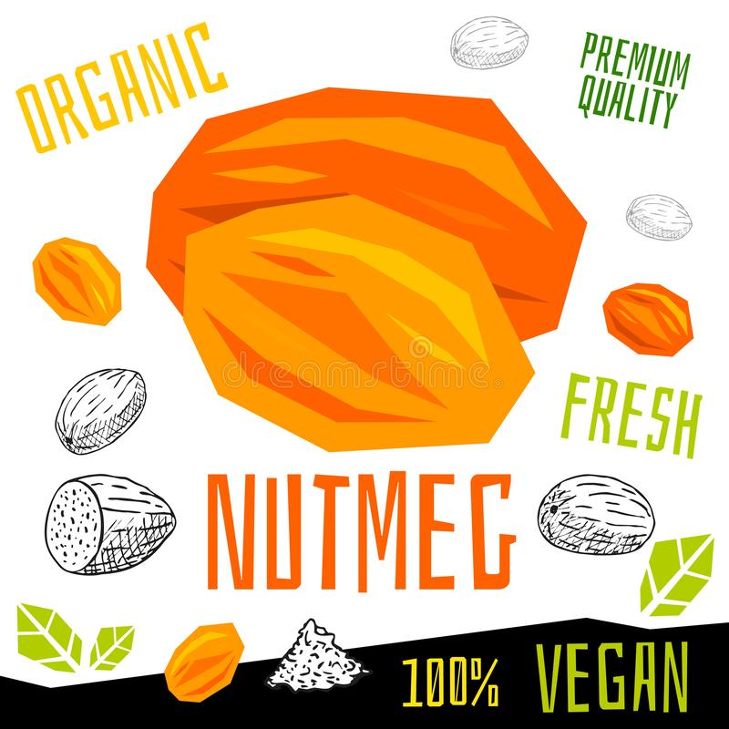 Nutmeg nuts icon herb label fresh organic condiment, nuts herbs spice condiment color graphic design vegan food. vector illustration