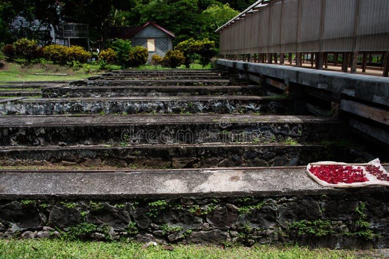 Nutmeg pods, Grenada royalty free stock photos