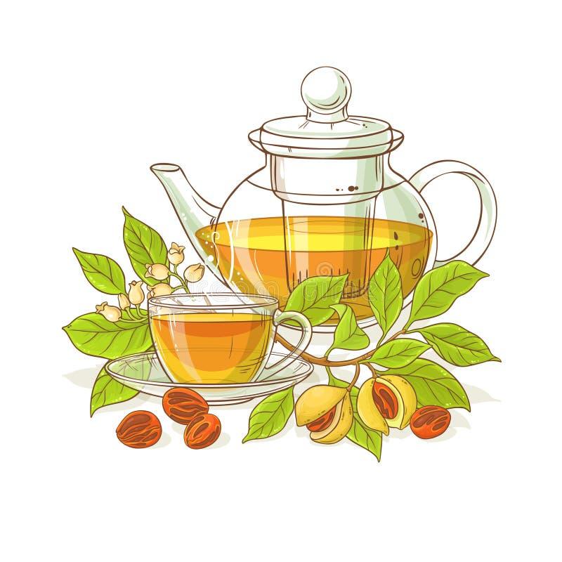Nutmeg tea illustration. Nutmeg tea in teapot illustration on white background vector illustration