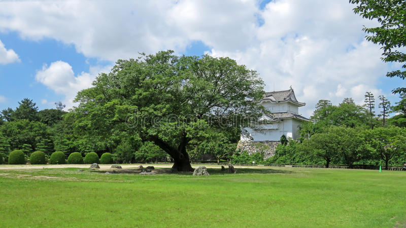 Nutmeg tree of Nagoya castle in Japan stock photography