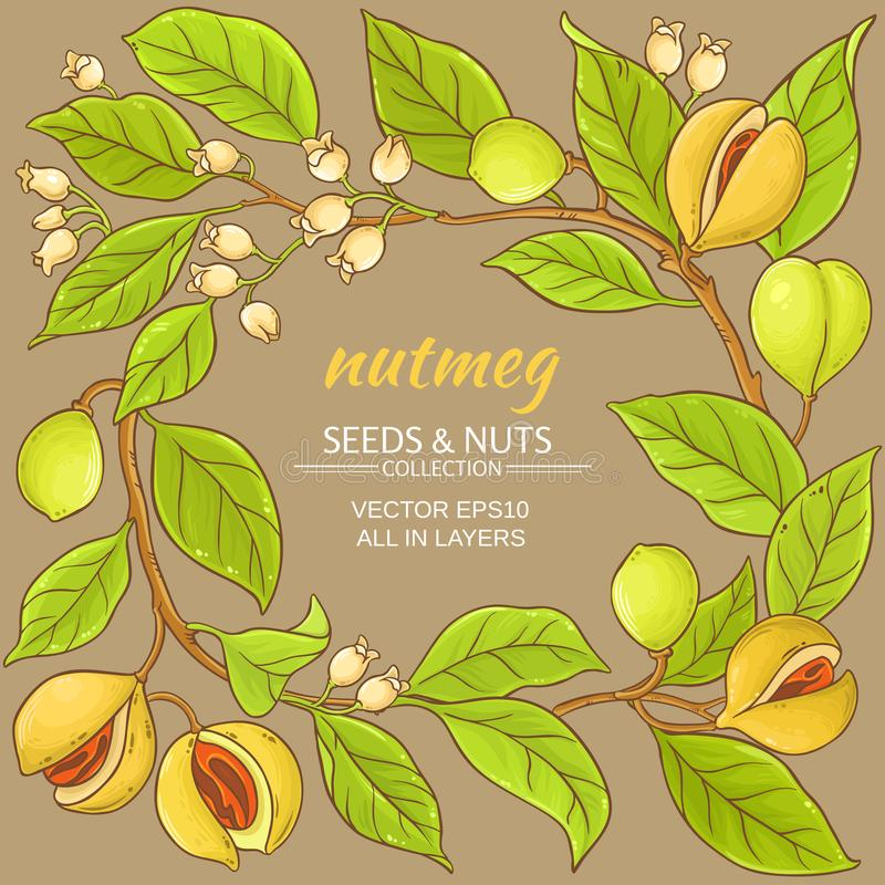 Nutmeg vector frame. Nutmeg branches vector frame on color background vector illustration