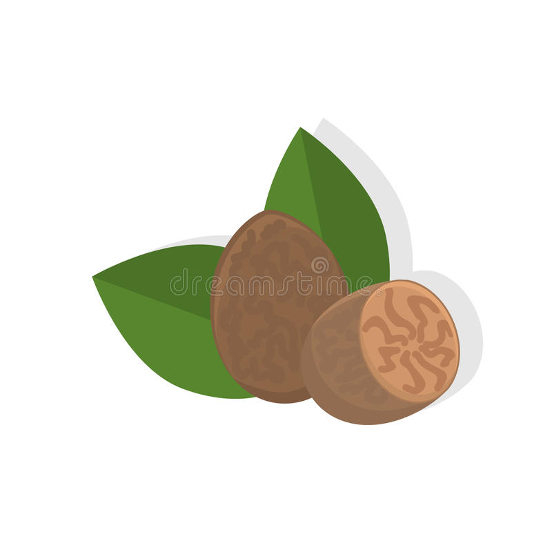 Nutmeg. Vector nutmeg isolated on background. Food art. Great for recipe, label, tag. menu, cosmetics design. Healthy lifestyle or vegetarian concept royalty free illustration