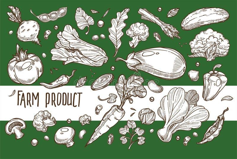 Nutrición vegetariana del alimento biológico vegetal de la cosecha del producto agrícola ilustración del vector