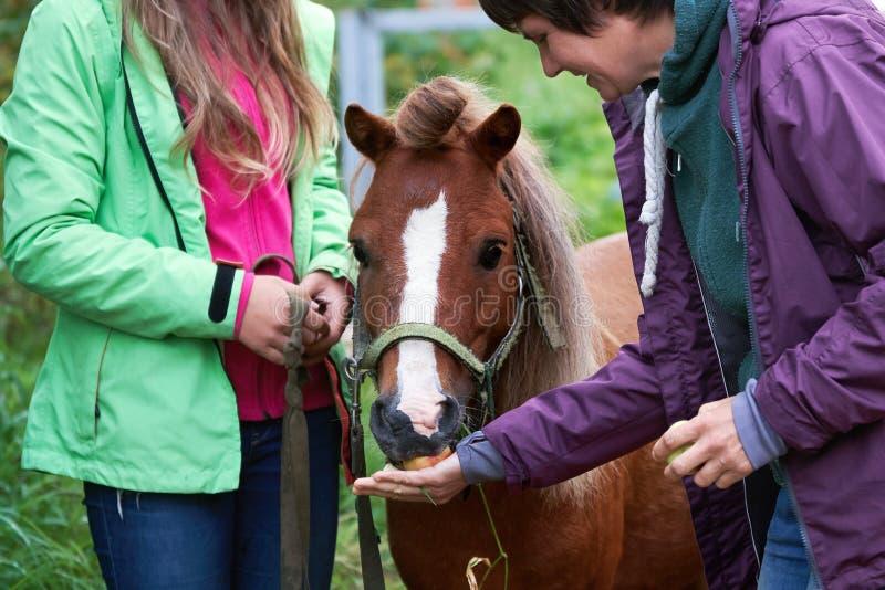 Nutrire una strana colt di pony con mele appena raccolte all'aperto in estate fotografie stock libere da diritti
