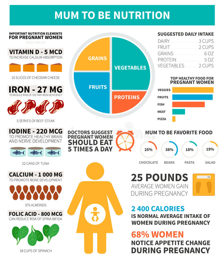 Nutrition de grossesse infographic illustration de vecteur