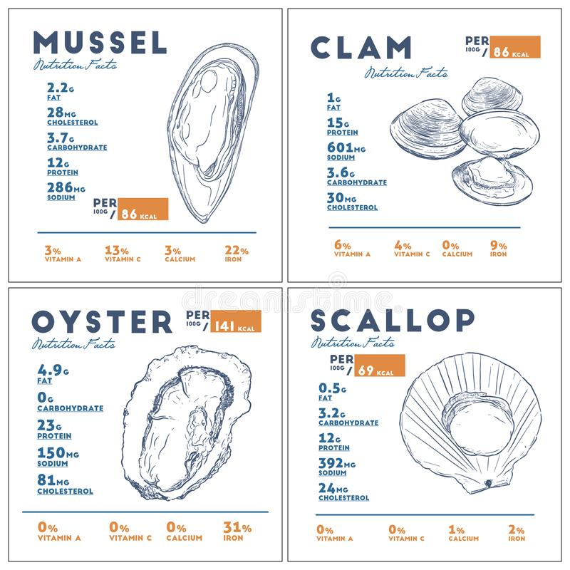Nutrition facts of mussel, clam, oyster and scallop hand draw sketch vector. Set of Nutrition facts of mussel, clam, oyster and scallop hand draw sketch vector stock illustration