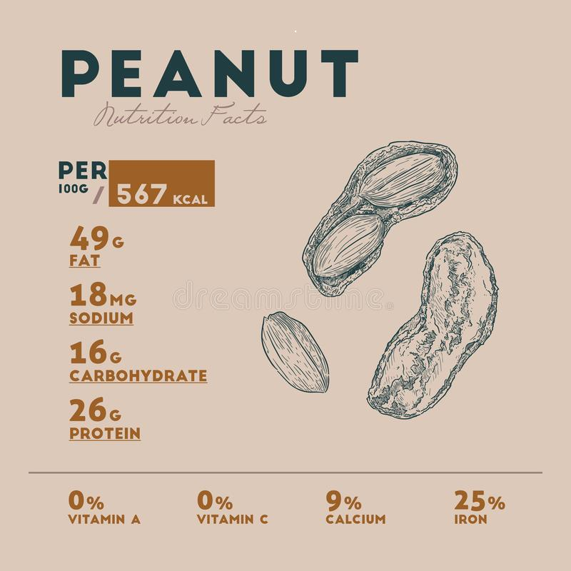 Nutrition facts of peanut. S, Hand draw sketch vector stock illustration