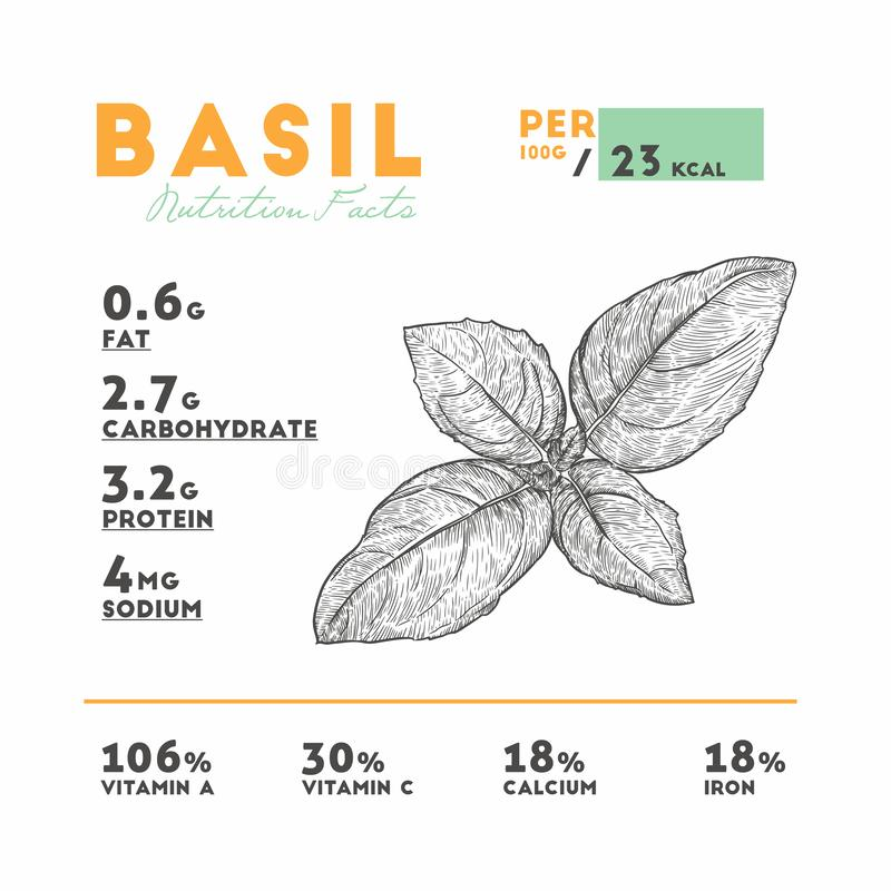 Nutrition facts of raw basil. Hand draw sketch vector vector illustration