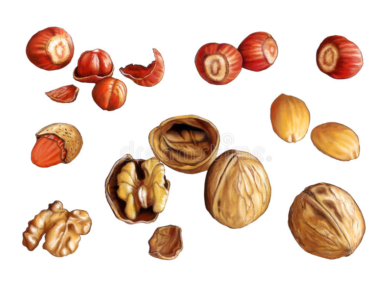 Nuts. Assorted nuts: walnuts, almonds and hazelnuts. Digital illustration, clipping path included