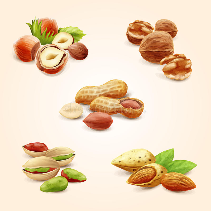 Free Nuts Stock Image - 62068291