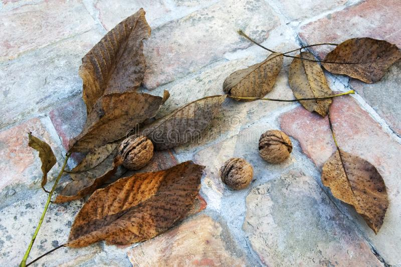 Nuts And Autumn Leaves On Brick Path. royalty free stock images