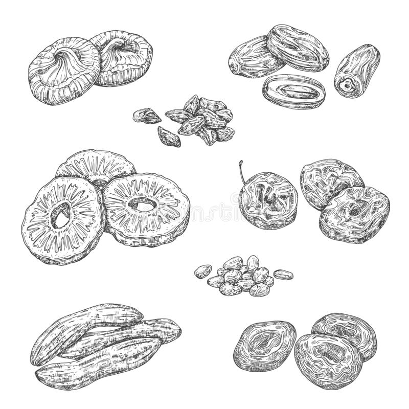 Nuts, berries and dried fruits isolated sketches. Dried fruits and candied berries isolated sketches. Vector monochrome pineapple and banana, damson fruit and stock illustration
