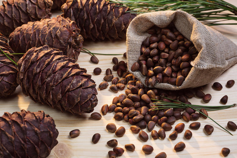 Nuts and cedar cones. stock photography