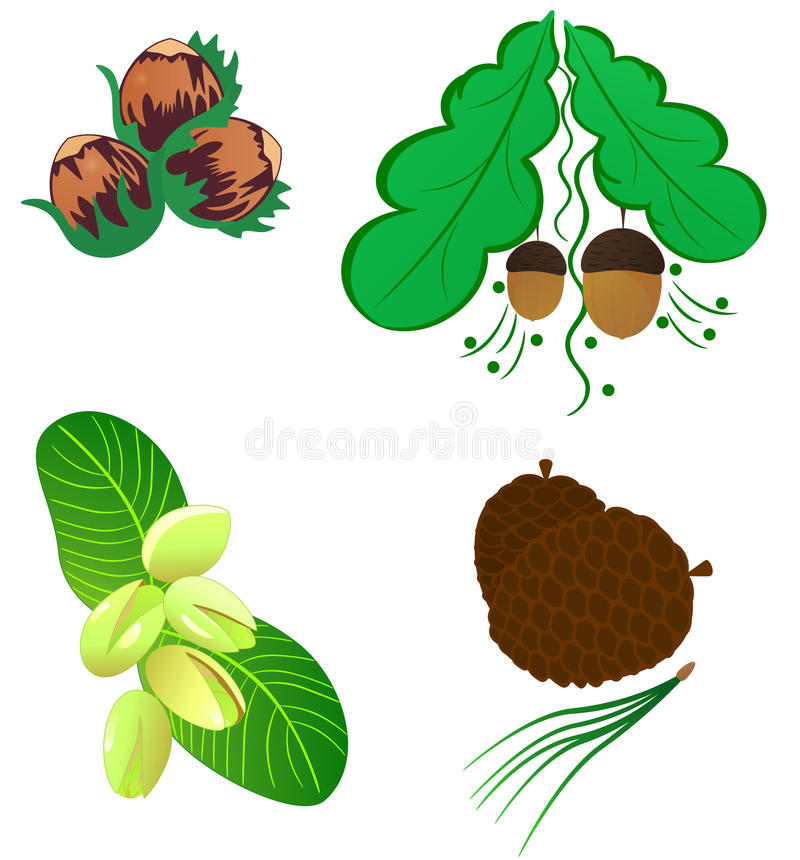 Nuts collection stock illustration