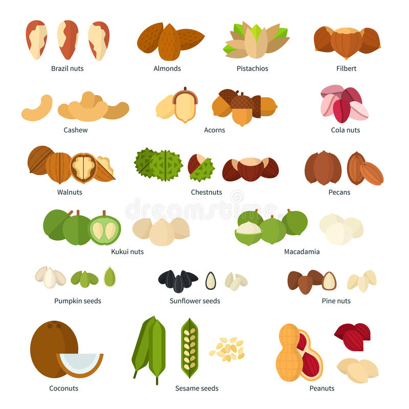 Nuts collection vector illustration