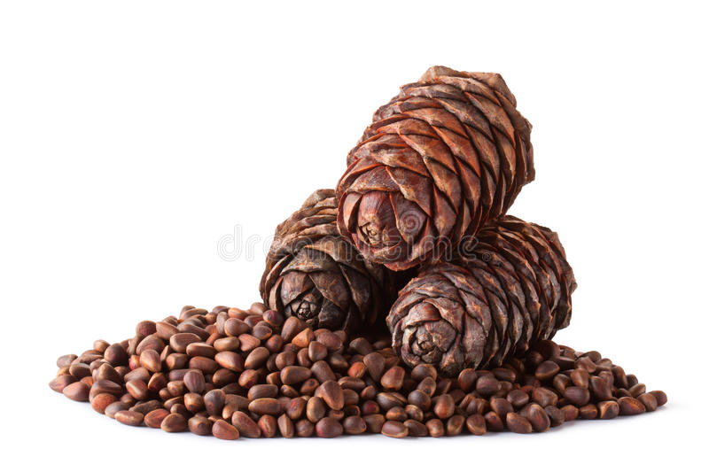 Nuts and cones of Siberian cedar (pine) royalty free stock photo