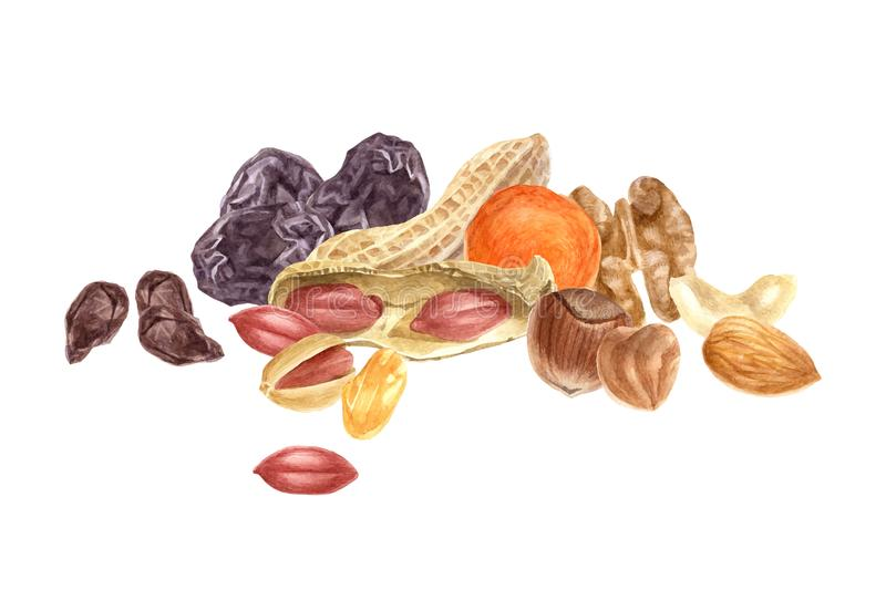 Nuts and dried fruits watercolor border. Isolated on white background stock illustration