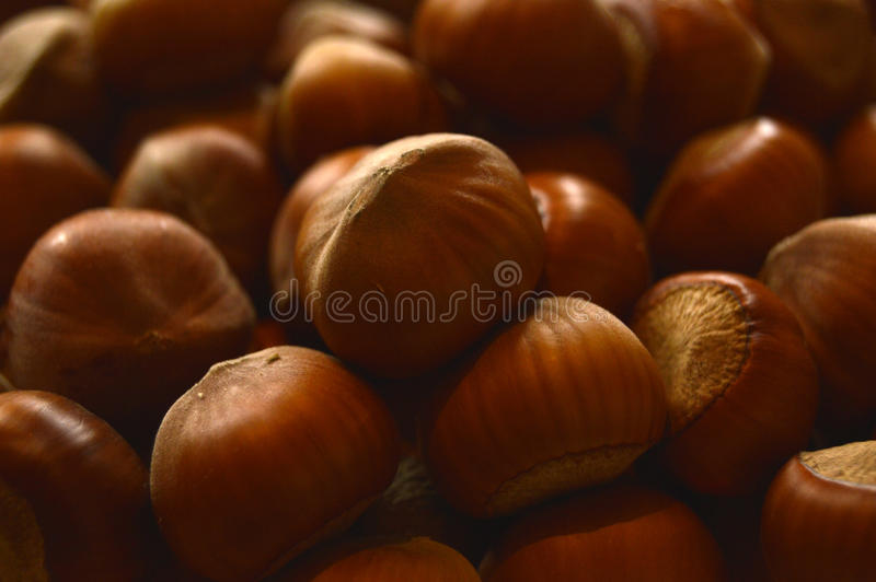 Nuts of a filbert stock photo