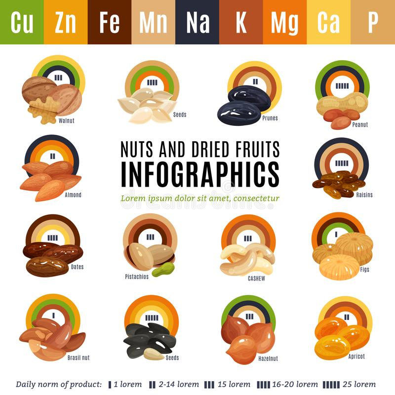 Nuts Flat Infographics vector illustration