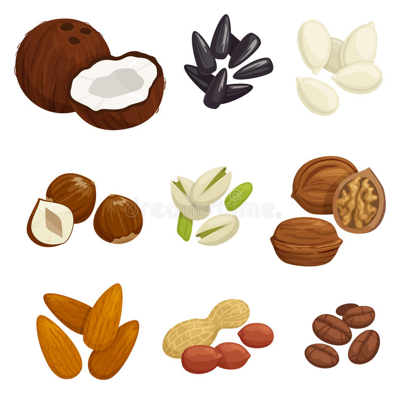 Free Nuts, Grain And Kernels Vector Icons Royalty Free Stock Image - 77636576