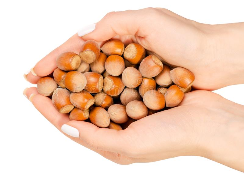 Nuts Haselnuss in der Hand stockfoto