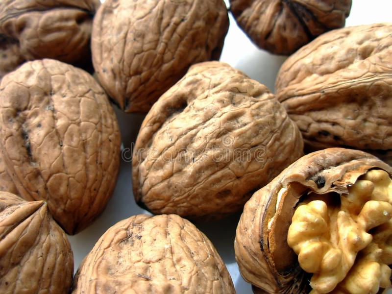 Nuts I stock images