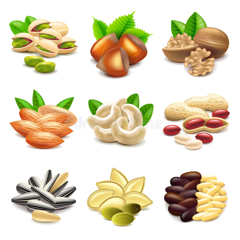 Nuts icons vector set vector illustration