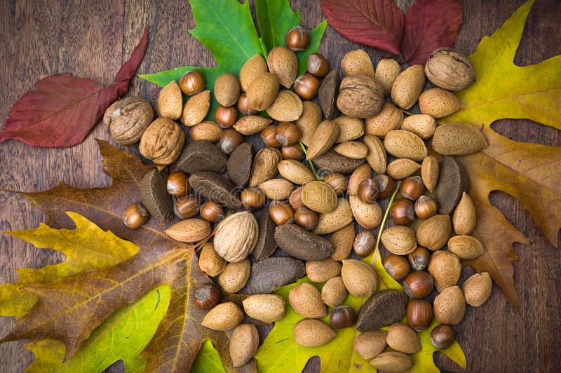 Nuts And Leaves Royalty Free Stock Photography
