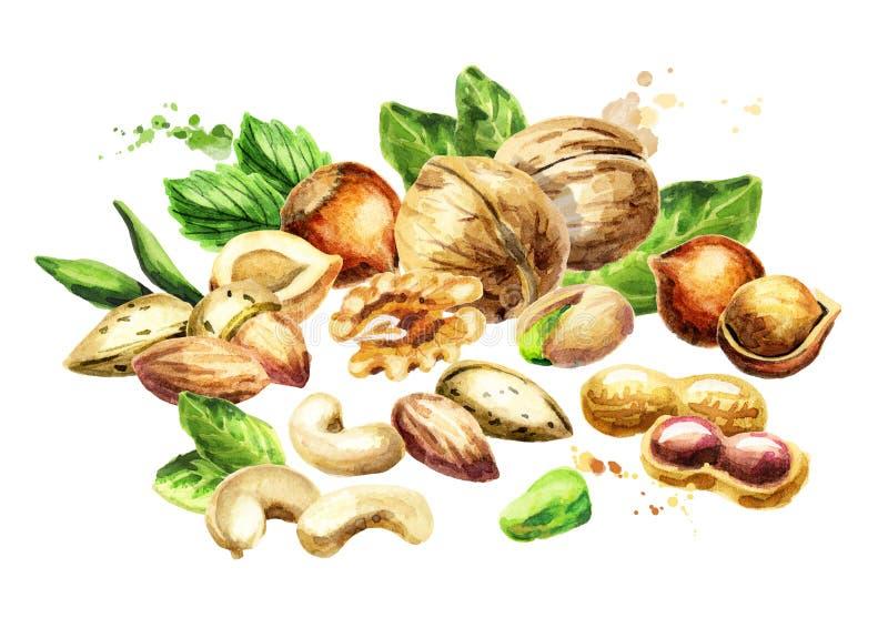 Nuts mix. Natural organic food. Watercolor illustration stock illustration