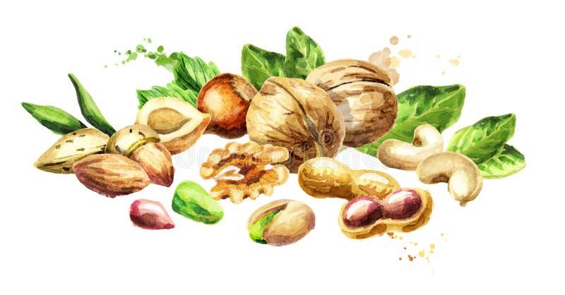 Nuts mix. Natural organic food. Watercolor illustration. Nuts mix. Natural organic food. Watercolor hand-drawn illustration vector illustration