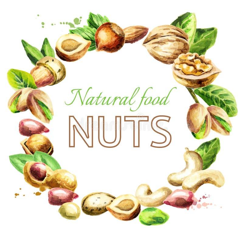 Nuts mix. Natural organic food. Watercolor illustration. Nuts mix. Natural organic food. Watercolor hand-drawn illustration stock illustration