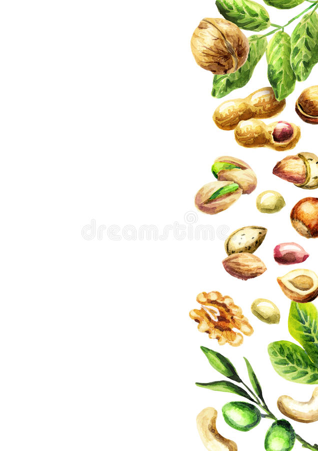 Nuts mix top view. Natural organic food. Watercolor. Hand-drawn background vector illustration