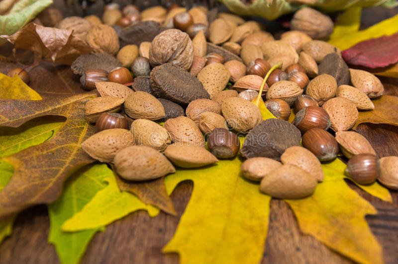 Nuts. Mixed nuts on the autumnal leaves stock photography