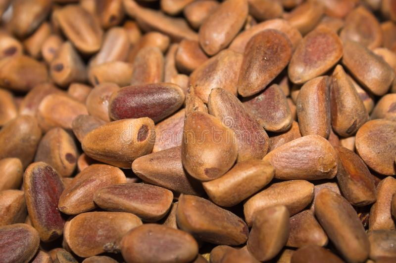 Nuts pine royalty free stock photo