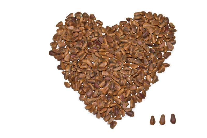 Nuts pine stock photos
